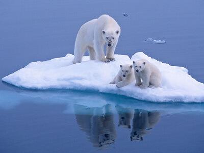 Megdöbbentő tények a globális felmelegedés hatásairól